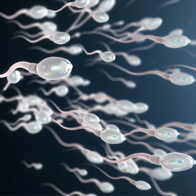Testosterone and Sperm Production