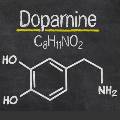 Testosterone and Dopamine Interaction