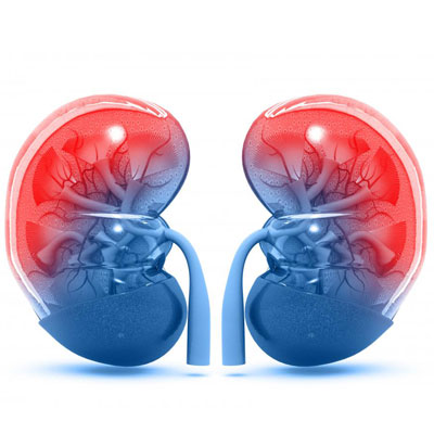What Does Testosterone Do to Your Kidneys