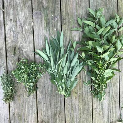 Herbs That Help Balance Hormones